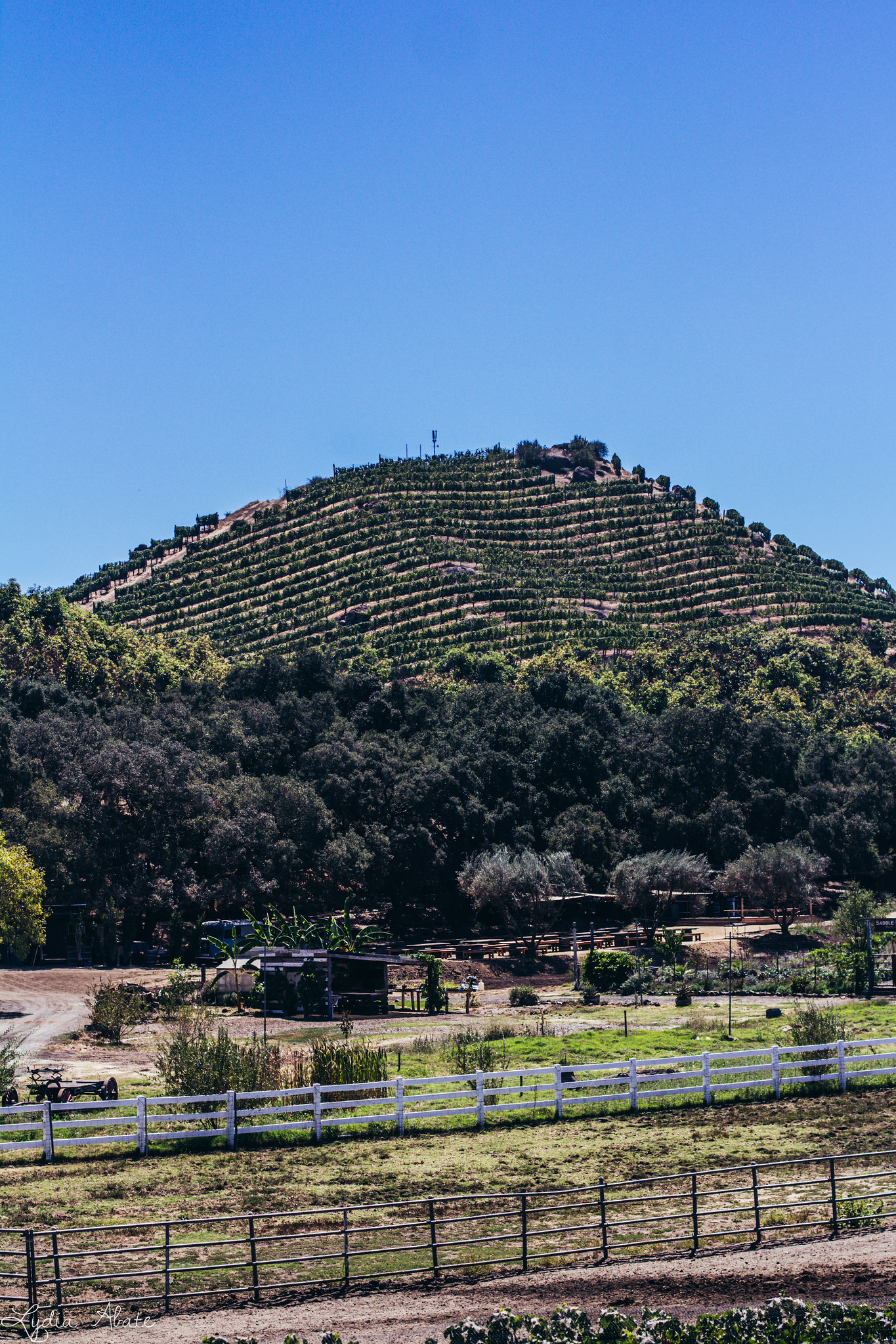 vineyard hill-1.jpg