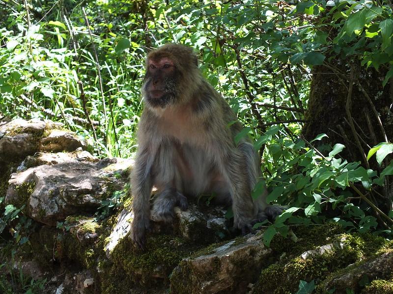 Rocamadour - La Forêt des Singes (Le Garroustié)