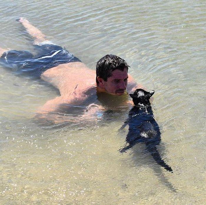 Кошка-пловец из Австралии фото