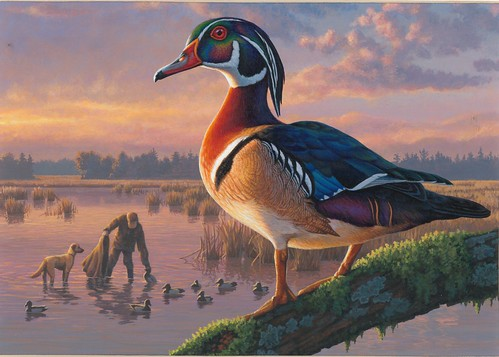 2nd Place: 2018 Federal Duck Stamp Contest Entry 121