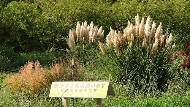 DSC03165-01花菜ガーデンH3009
