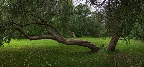 tree park pärnu estonia