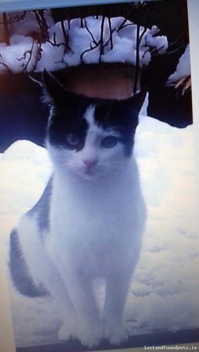 [Updated] Sun, Sep 2nd, 2018 Lost Female Cat - R458, Barefield, Clare