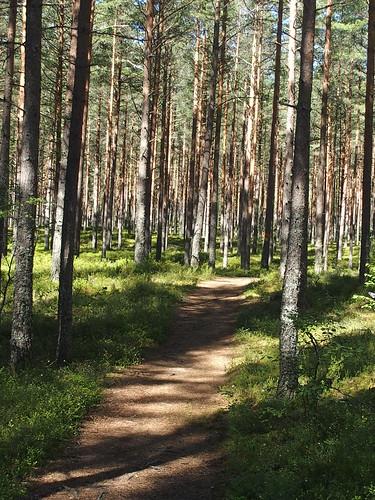 BE E8 Gles skog