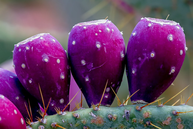Cactus-Sticky-10-7D1-082718