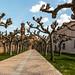 2261 Monasterio de Veruela, Aragón.