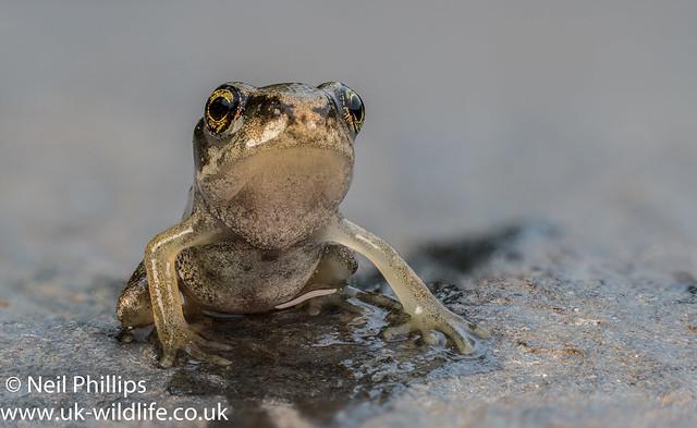 Froglet stack-4