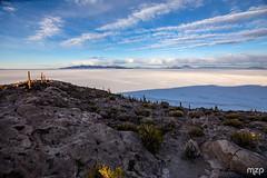 Le Salar depuis l'Île d'Incahuasi