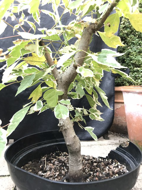 Wee Trees Bonsai Help Forum Advice For All View Topic 2 Problem