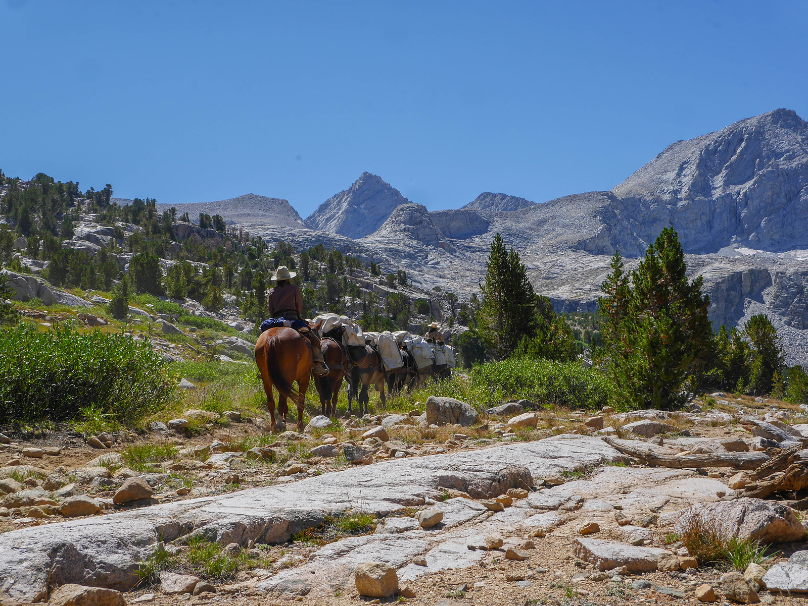 Pack train heading south on the JMT up to Forester