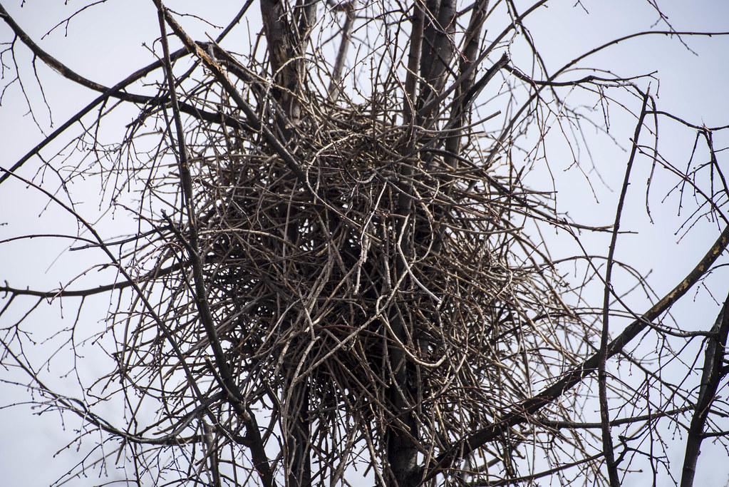 История гнезда.