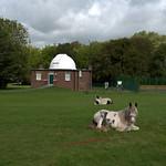 Horses on Moor Park, Preston