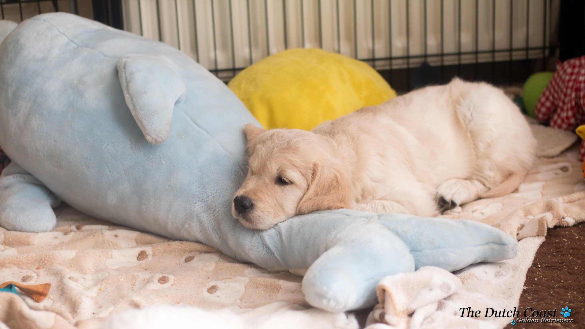 Slaap puppy slaap