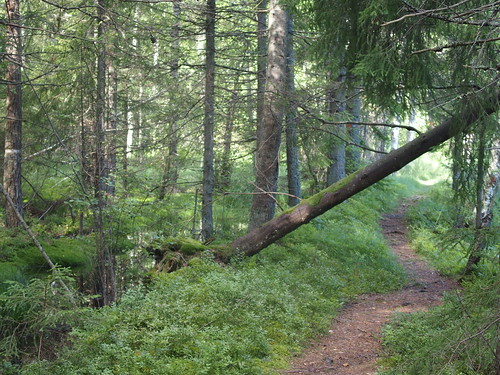 SÖ E36.2 Timber