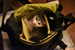 kitten approved photo bag