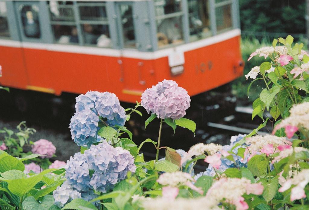 2018-07-31 紫陽花と箱根登山鉄道 002