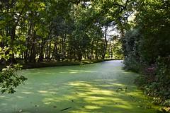Green Dyke. Nikon D3100. DSC+0825.