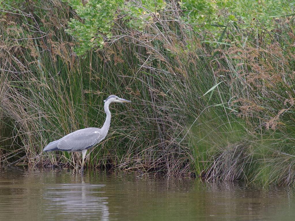 Sortie à la réserve ornithologique du Teich - 24 août 2018 - Page 4 42562590040_2b3612c001_o