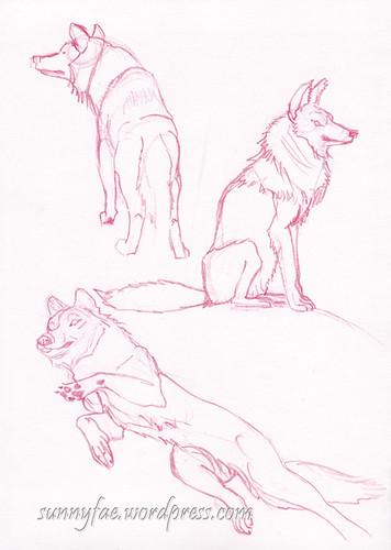 wolf gesture sketches 2
