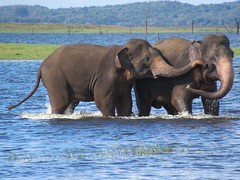 Sri Lanka Parks and Reserves