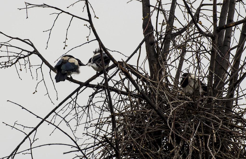 История гнезда, слётки.