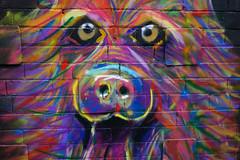 Viewfinders Graffiti art hunt.