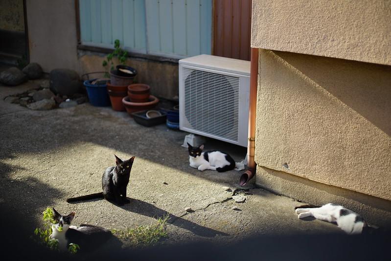 Sony α7Ⅱ+CARL ZEISSのPlanar T 2 50 ZM雑司ヶ谷線路沿いの黒白八割れ一家 猫 黒白八割れ 黒 黒ブチ 黒白八割れ
