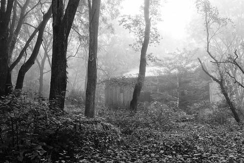 Foggy Day_3