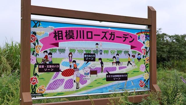 相模川ローズガーデンDSC00731-01