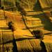 A field landscape at dawn by fotoswietokrzyskie