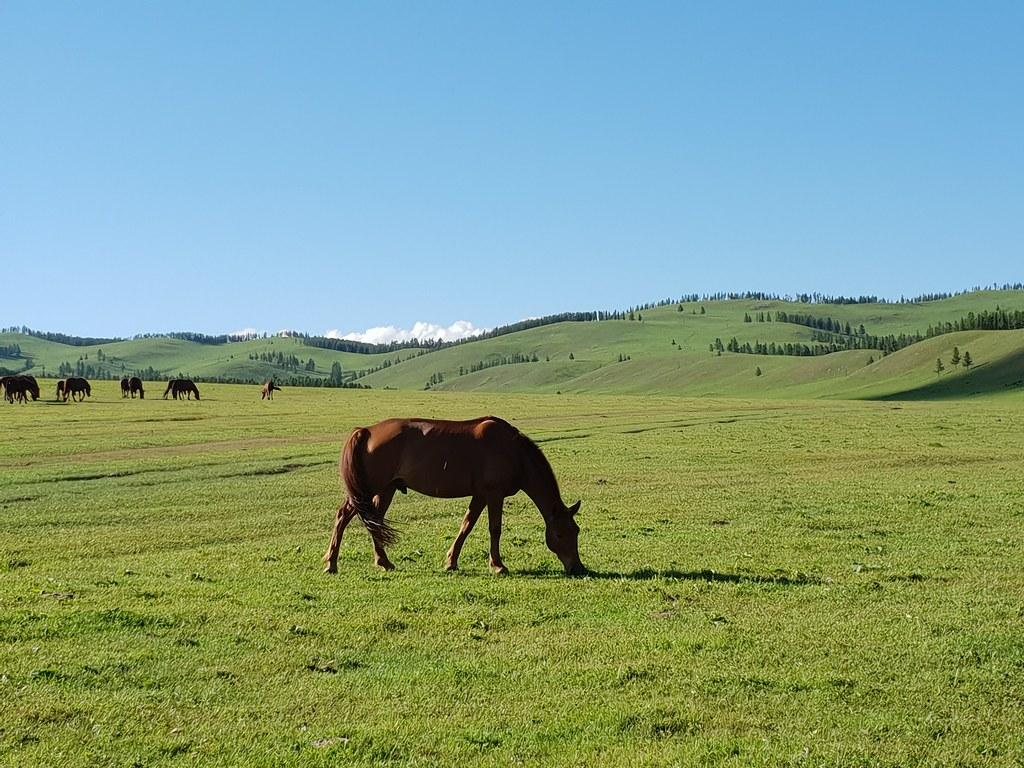 Horses grazing in central Mongolia - 50 de los lugares más bellos de Asia