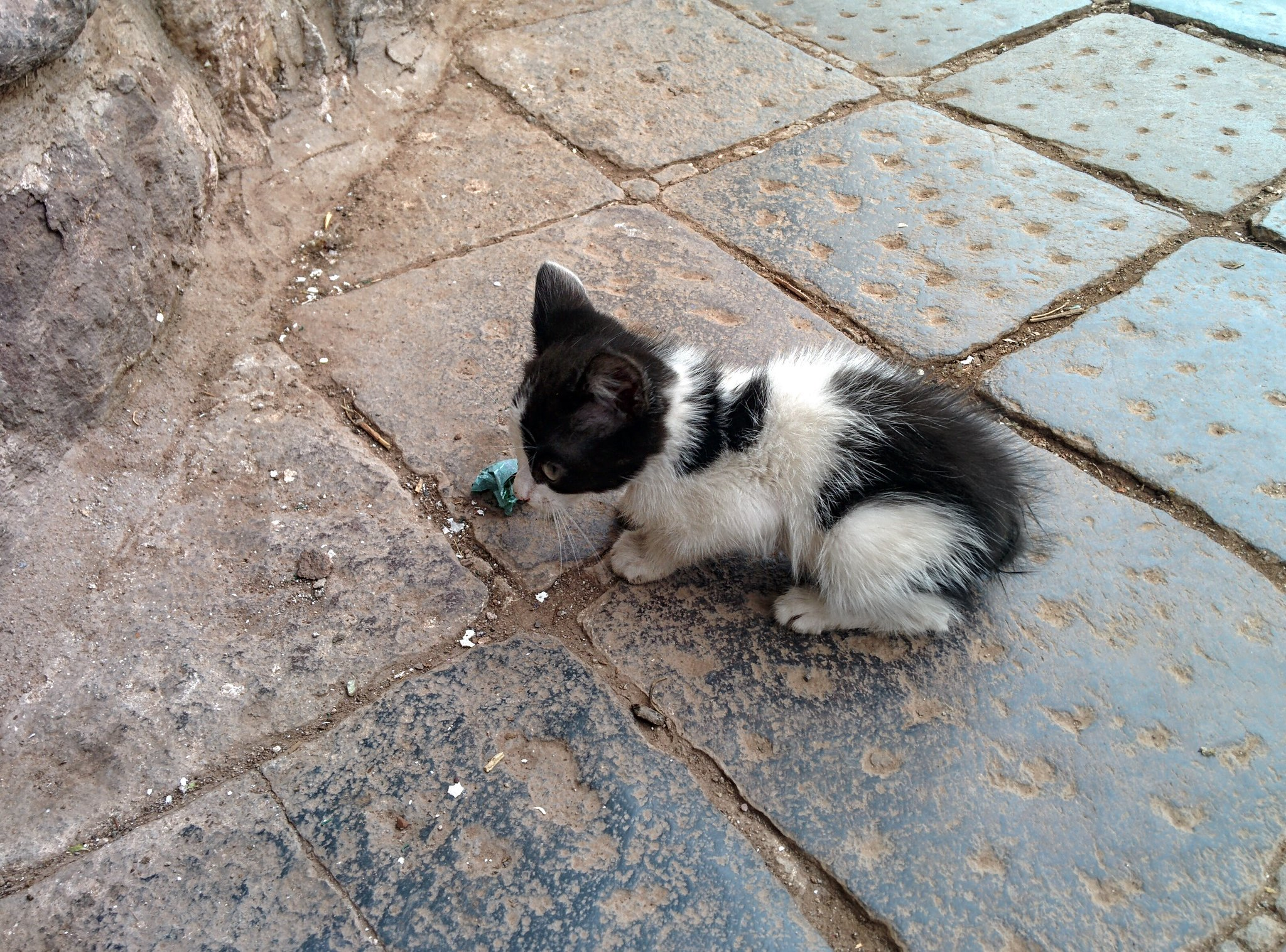 A tiny kitten I found in Cusco