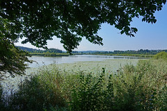 2018-08-19 Maising, Maisinger See, Starnberger See 021
