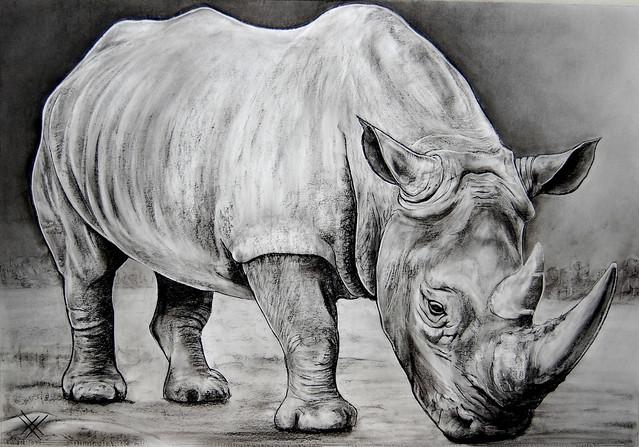 Animals ....Rinoceronte, Nikon D40, AF-S DX Zoom-Nikkor 18-55mm f/3.5-5.6G ED II