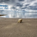 alone on the beach, Crescent Beach, BC by gks18