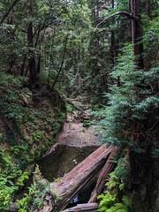 The Waterfall Spot Soquel California
