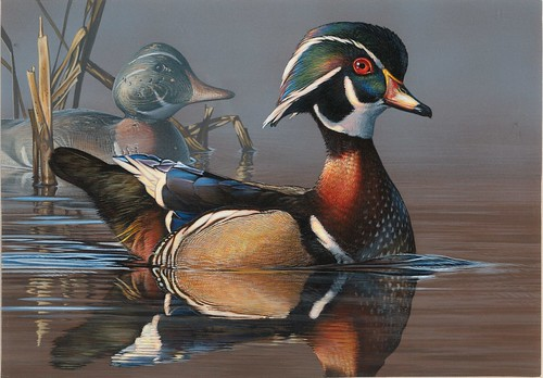 Winner of the 2018 Federal Duck Stamp Contest