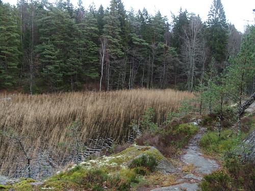SÖ E54 Sjön Björken4