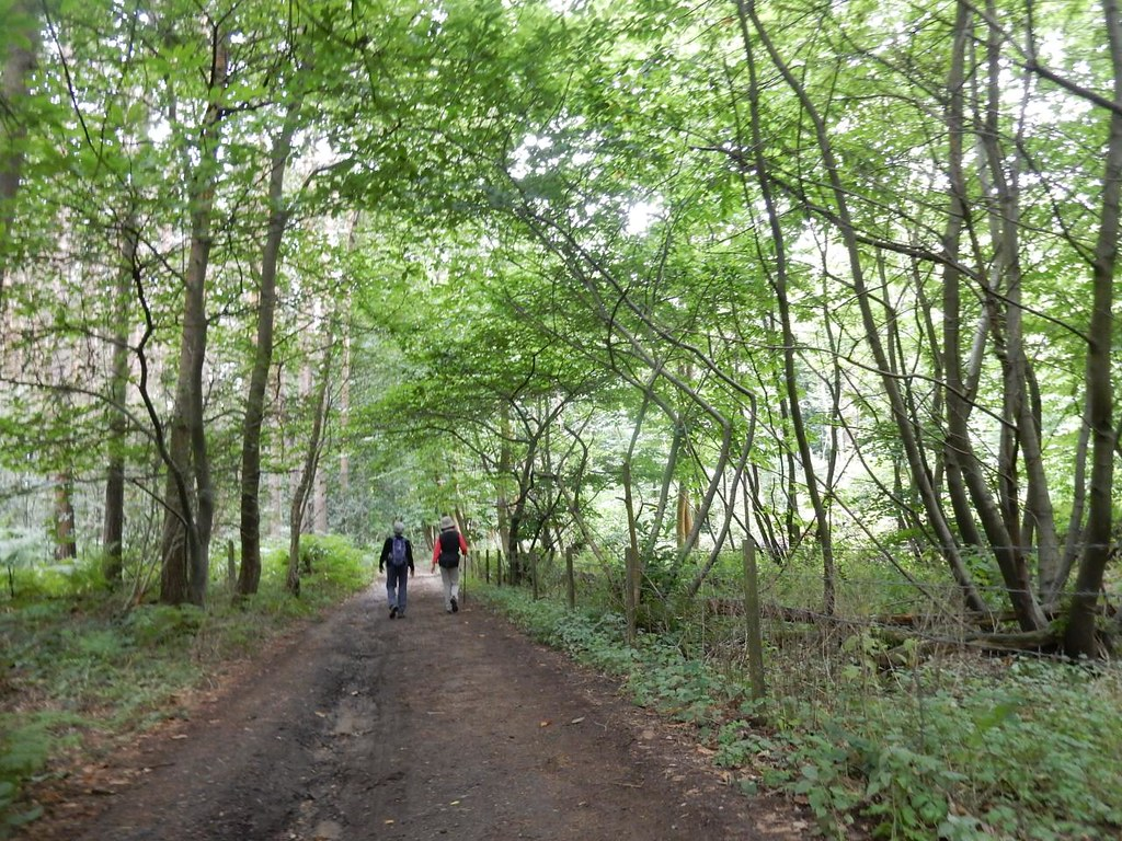 In the woods Tadworth via Headley Heath Circular