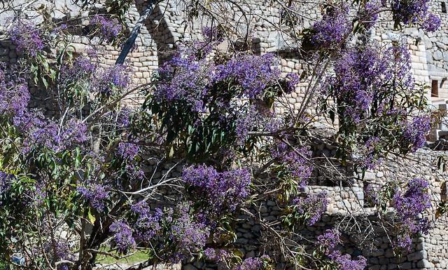 Purple Flowers, Nikon D90, AF-S DX VR Zoom-Nikkor 18-105mm f/3.5-5.6G ED
