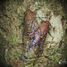 Cicadas in a Loving❤️Mode by Yongi Ng