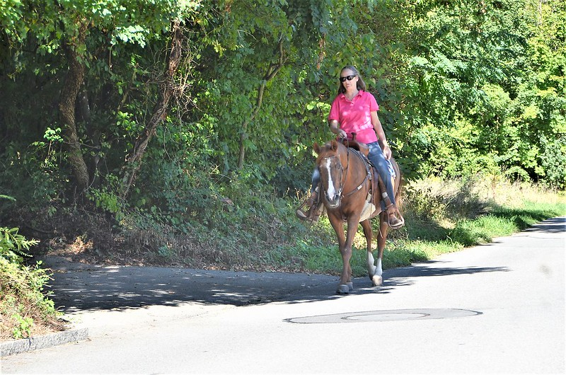Horse 08.09 (1)