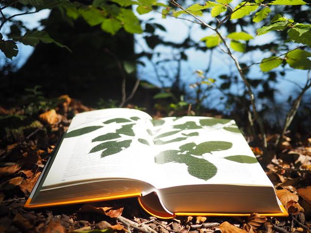 Reading Book in Underwood Beech Tree Forest Leaves @ Lake Shore - © - Buch Unterholz Wald Buche Laub Blätter @ Seeufer - ©