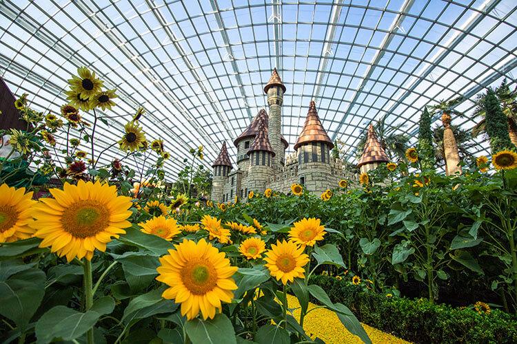 Sunflower Floral Displays