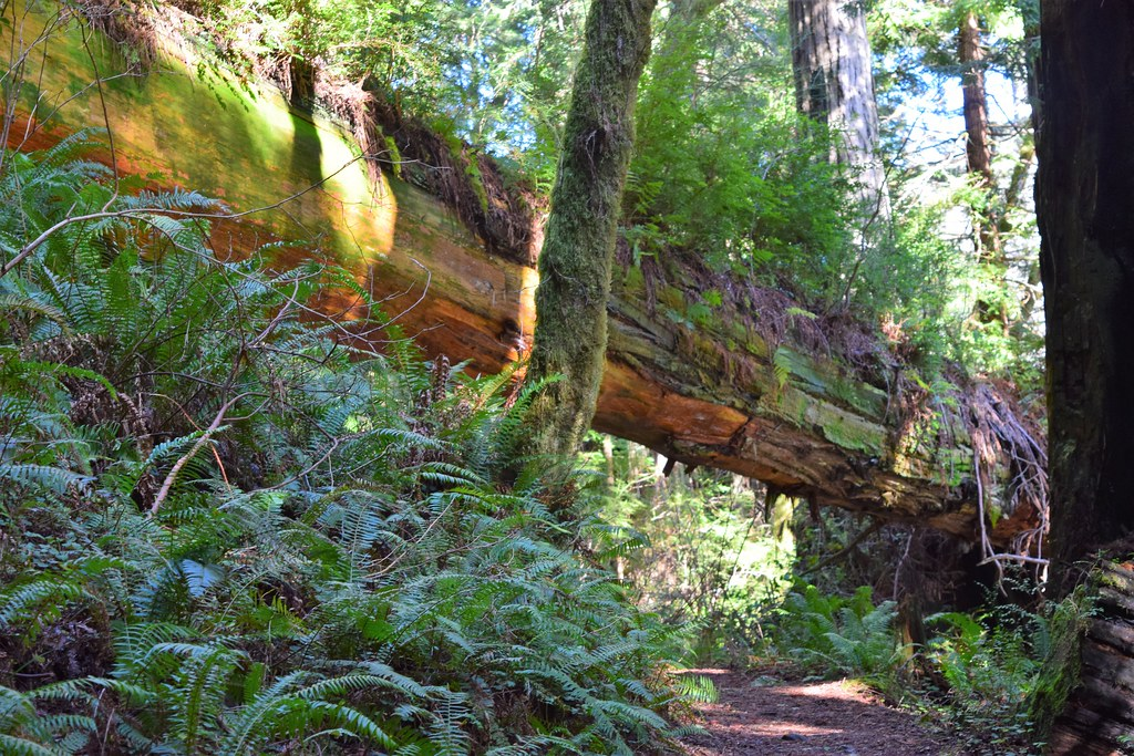 Trillium Falls Trail #1 - Fallen Log across the trail