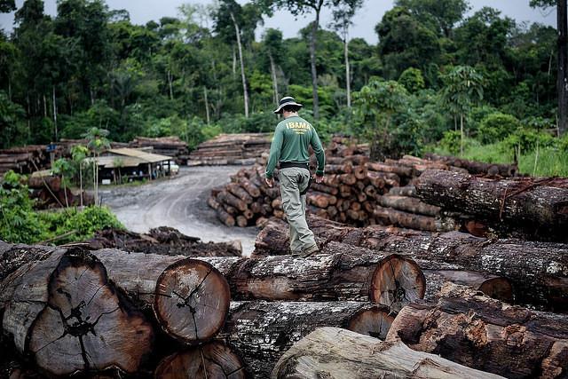 BRASIL | Amazonia queda fuera de la mayoría de planes de gobierno de los candidatos