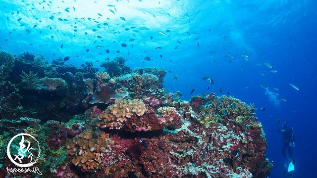浅瀬のサンゴには熱帯魚いっぱい♪