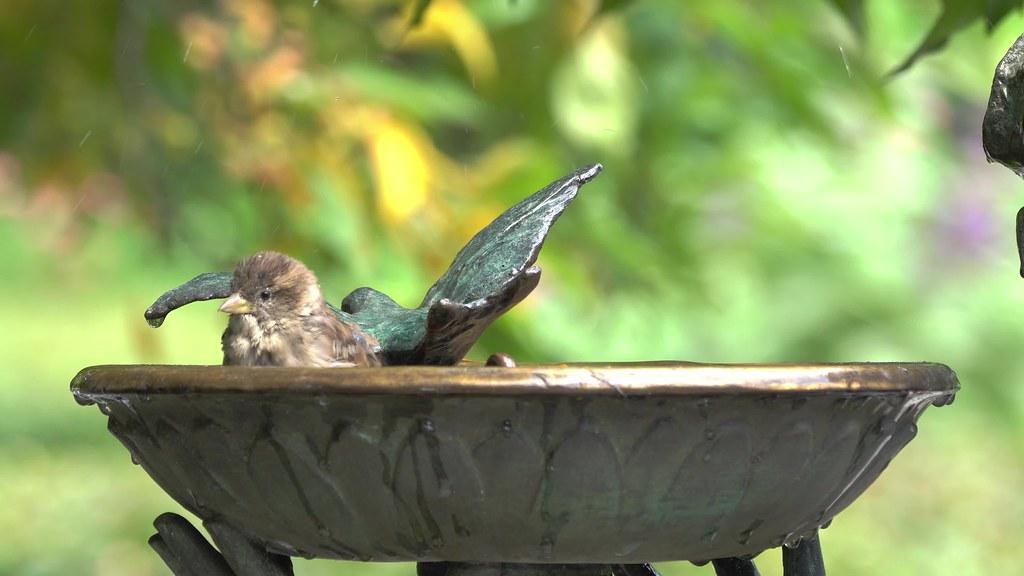 Birdbath 082518 4k Clip 1101656678