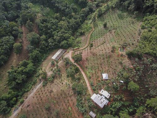 permatree landscape birdview ecuador drone