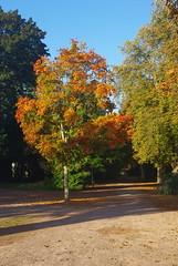 L'arbre orange - Photo of Le Poinçonnet